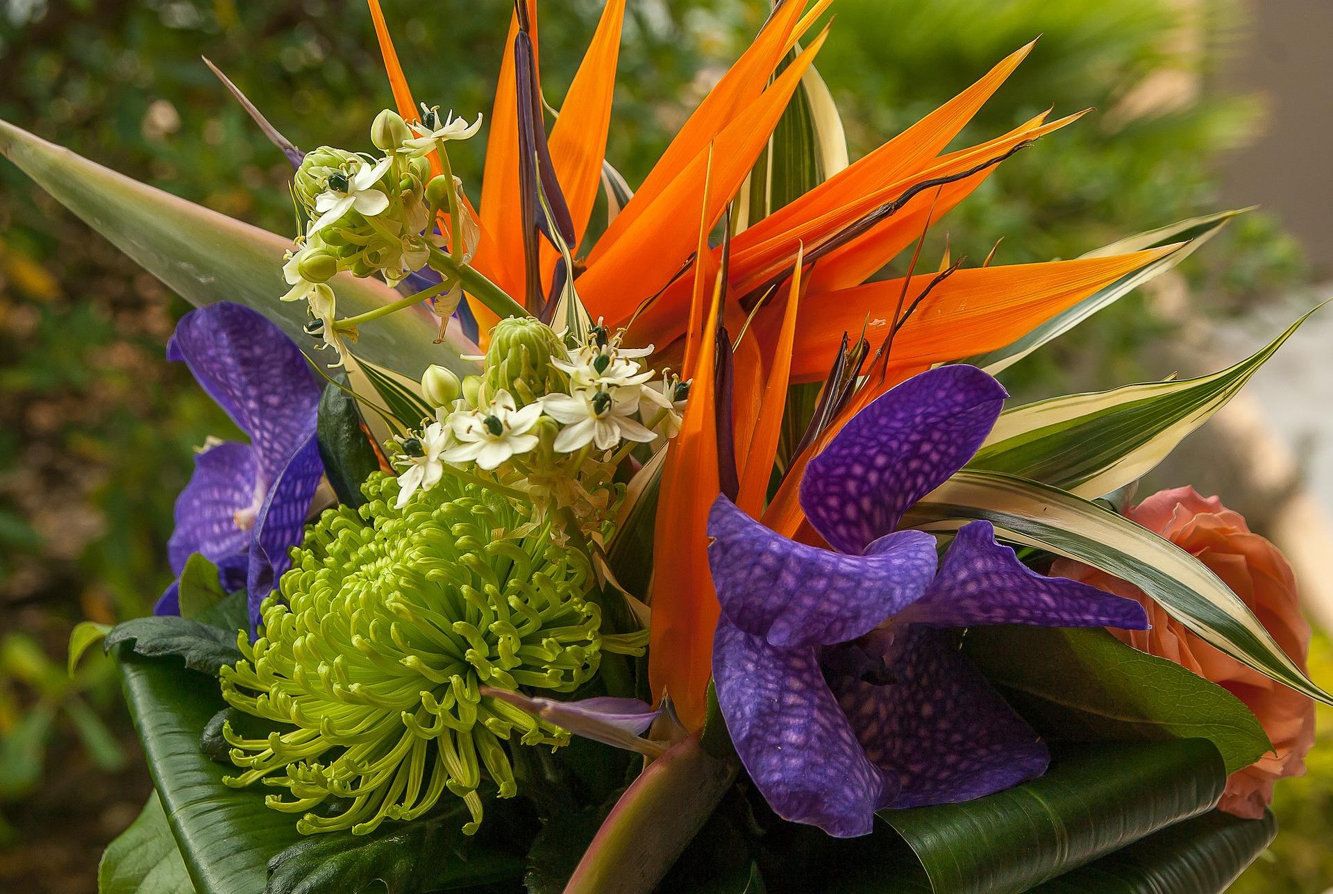 flowers-3358058_1920