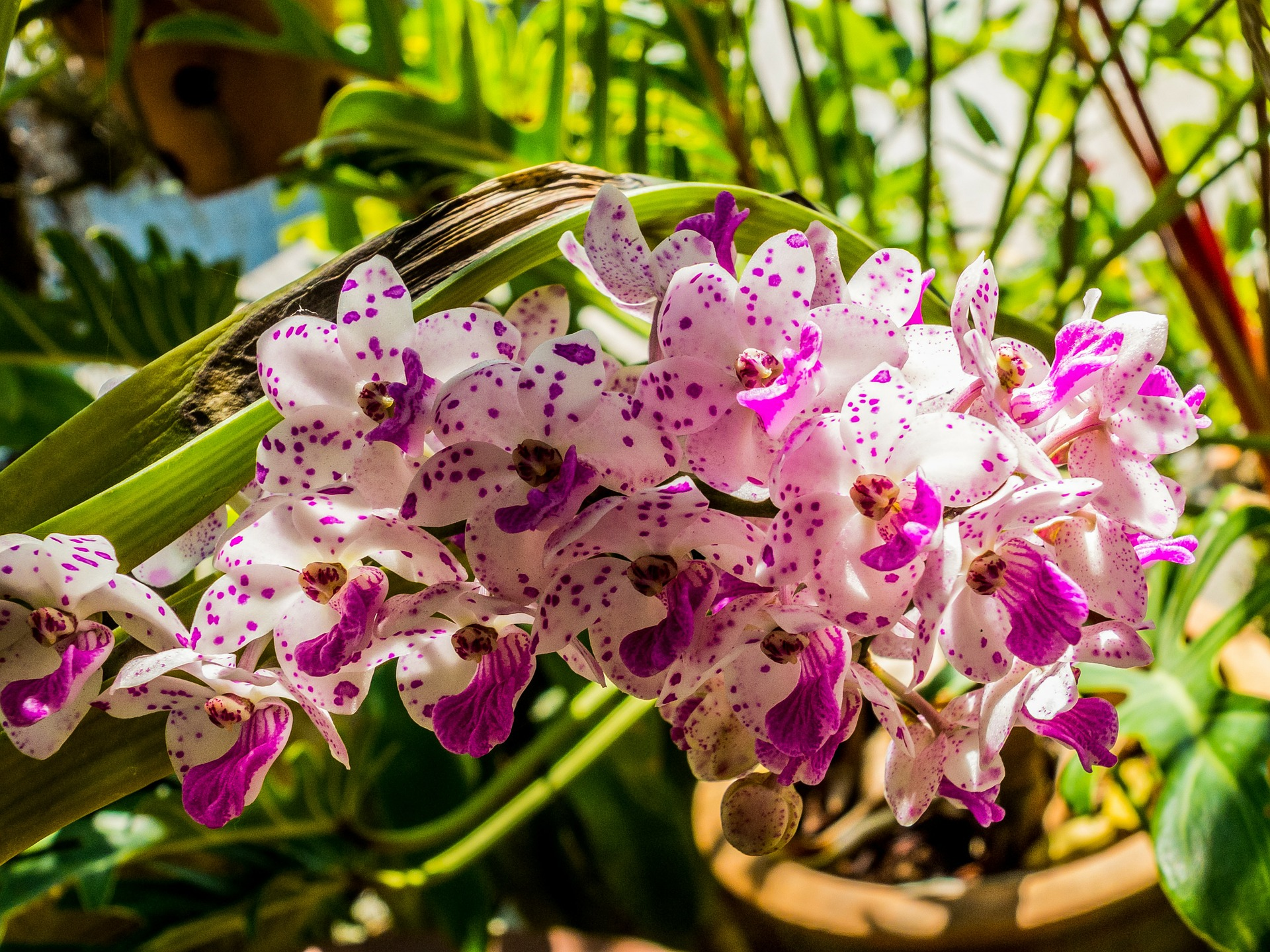 orchid-262640_1920